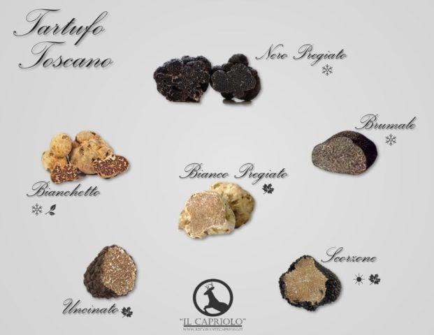 Varietà di tartufo della Toscana